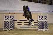 Hest til salg - CONTENT 4