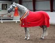 Hest til salg - Betico XXX