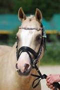 Hest til salg - SPOOKY