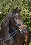 Hest til salg - ARCTICA