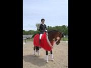 Hest til salg - ALGECIRÁS KÆRLUND