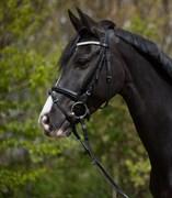 Hest til salg - RONJA