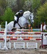 Hest til salg - VICKTOR