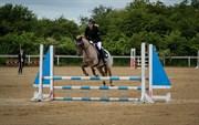 Hest til salg - VALENTINS LAMIRADO