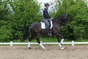Hest til salg - VIMOGÅRDENS ELVIRA
