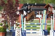 Hest til salg - LL VOLDBYHOLM'S ANELA