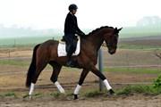 Hest til salg - CIENNA