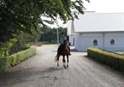 Hest til salg - JAAP STAM