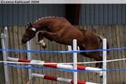 Hest til salg - Betty Boop