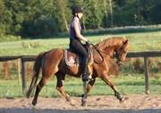 Hest til salg - STAR LIGHT