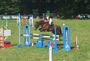 Hest til salg - MARGO