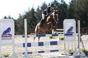 Hest til salg - NØRLUNDS WERONA