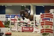 Hest til salg - LILLESTARUPHØJS CAPRIANO