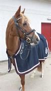 Hest til salg - FESTINA´S CATZANI