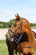 Hest til salg - GLENWOOD MOULIN ROUGE