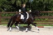 Hest til salg - MICHELLINA