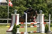 Hest til salg - Karlshøjgaards Zelina