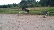 Hest til salg - A.M. CHANDLER'S BOY