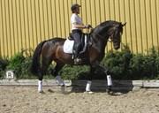 Hest til salg - SWEETHEART B