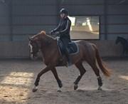 Hest til salg - HEDELUNDS DONNA REGITZE