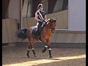 Hest til salg - FESTINA'S DE CHEERI