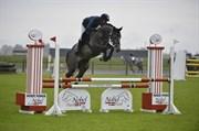 Hest til salg - BAJADS