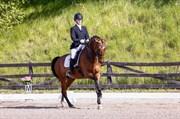 Hest til salg - VALLØS NATALJA
