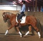 Hest til salg - CATHE