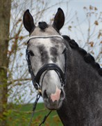 Hest til salg - LITTLE J.