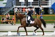 Hest til salg - UTAH