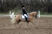 Hest til salg - BECH'S NIALL