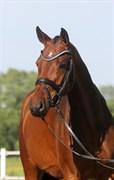 Hest til salg - Gørklintgårds Oraya