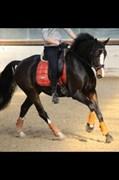 Hest til salg - DARLING DELUXE