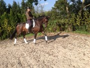 Hest til salg - SCHUBERTS CHANTALL