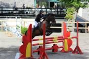 Hest til salg - SABU