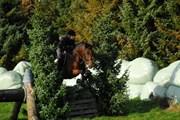 Hest til salg - ÅKÆRSMINDE´S UNO