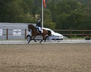 Hest til salg - HOLMLUNDS LORD COLWYN