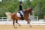Hest til salg - BOHEMO BOGIE