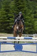 Hest til salg - RAYPAWERS CASILA