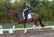 Hest til salg - Fider Favori