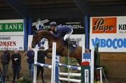 Hest til salg - PRIMULA ASK