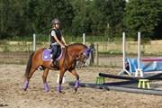 Hest til salg - ROMEO'S JESSIE