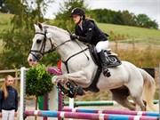 Hest til salg - SPRINGHILL CRUISE CONTROL