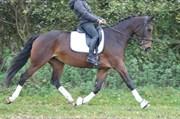 Hest til salg - ALL 2 MOVE FAIRYTALE