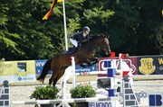 Hest til salg - Winny