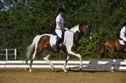 Hest til salg - HEDENS QUINTANA