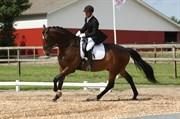 Hest til salg - OBREJA'S LUCKY LUKE