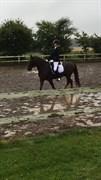 Hest til salg - TIMON