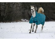Hest til salg - UPHELIA STENAGERGAARD
