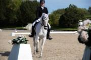 Hest til salg - HERI´S SKYWALKE R CONALL